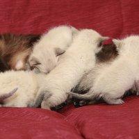 Мама Матильда и её дети-из серии Кошки очарование мое! :: Shmual & Vika Retro