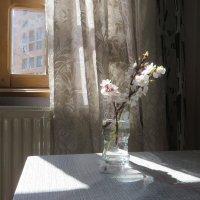 Солнечным днем :: Наталья Джикидзе (Берёзина)