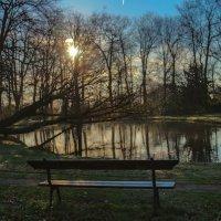 Утром в парке :: Светлана Щербакова