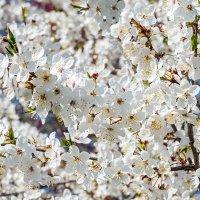 Вот и весна :: Юрий Яловенко