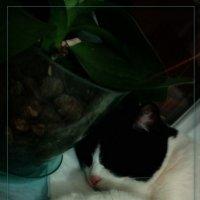 Вот  как сладко мы спим... :: maxim