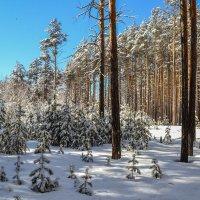 апрельский пушистый снег :: сергей