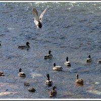 А мне летать охота... :: muh5257