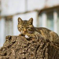 Я на солнышке лежу :: Елена Зудова