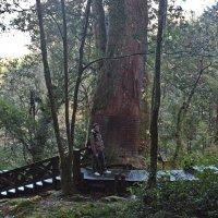 Сумеречный лес. :: Виталий Селиванов