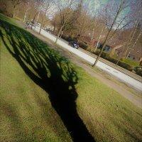 Тень выбежала на газон :: Валерий Розенталь