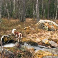 В Уппландском лесу :: liudmila drake