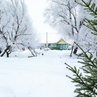 В морозный день :: Анатолий
