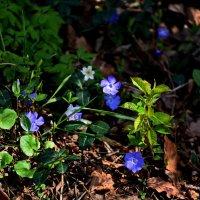 Молодая весна ... :: Владимир Икомацких