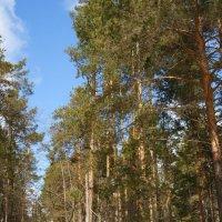 Путь по лесу продолжается :: nika555nika Ирина
