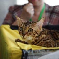 На выставке кошек. :: Валентина Налетова