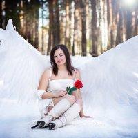 Красная роза :: Екатерина Лазарева