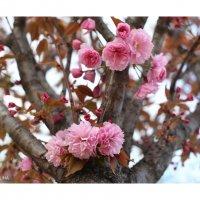 Весна в Париже! :: Фотограф в Париже, Франции Наталья Ильина