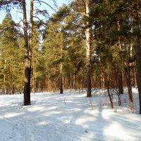 Сибирский лес . Март . :: Мила Бовкун