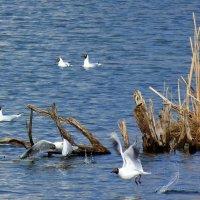 птичий мир :: Александр Прокудин