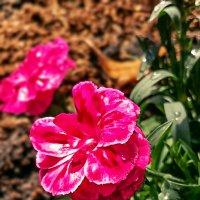 Мир опять цветами оброс.... :: Надежда