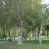 В парке... :: марина ковшова