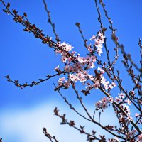 Весна расправляет крылья ... :: Владимир Икомацких