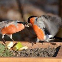 конкуренты :: linnud