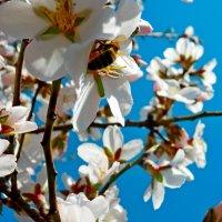 Пчела-трудяга :: Люша