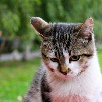 Кошка ждёт своего хозяина :: Анна Шишалова