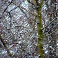сыпет снег :: Валерий Самородов
