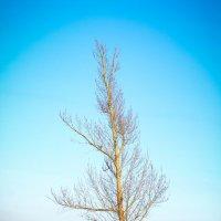дерево :: сергей мыряха