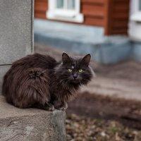 Меченый на районе :: Svetlana