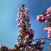 Красоты Весны ... :: Владимир Икомацких