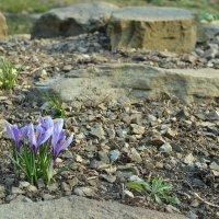 Весна :: Ольга Рыбакова