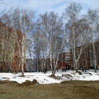 Весенний пейзаж . :: Мила Бовкун