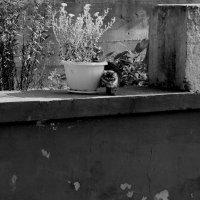 Бесхозный. Он ждал... ждал меня.. :: Валерия  Полещикова