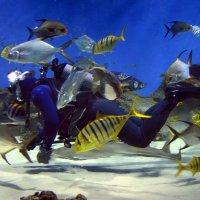 Ну очень большой Рыб :: Николай Ярёменко