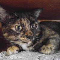 Кошка - осторожка. :: Сергей Адигамов