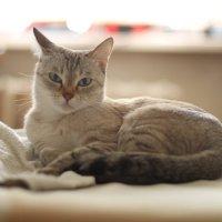 Моя главная модель. :: Natalia Petrenko