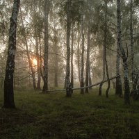 Утро в лесу :: Игорь Егоров