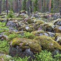 Лес и камни :: Константин