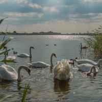Озеро Сасык-Сиваш, Евпатория. :: Roman Dergunov