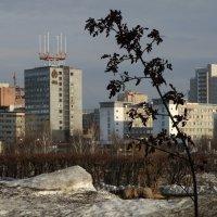 Деревце в большом городе :: Валерий Чепкасов
