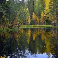 Лесное озеро. :: Наталья