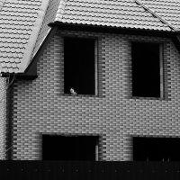 Кошкин дом :: павел Труханов