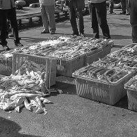 Пусан. Республика Корея. Инспекция кальмара на причале. :: Евгений Поляков