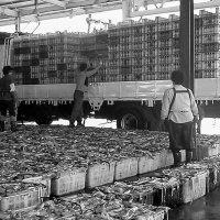 Пусан. Республика Корея. Погрузка кальмара. :: Евгений Поляков