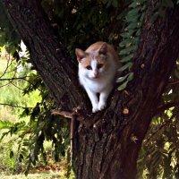 Кот на дереве :: Татьяна Королёва