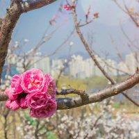 Весна идет - Весне дорогу! :: Tatyana Belova