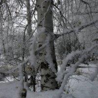 мартовские красоты :: павел бритшев