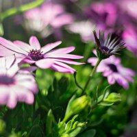 цветочки :: Tatyana Belova