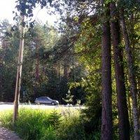 Отдых в лесу :: Svetlana Lyaxovich