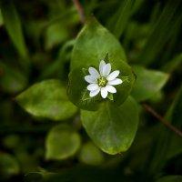 Весенние цветы :: Виталий Павлов
