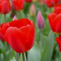 Весна! :: Наталья Петракова